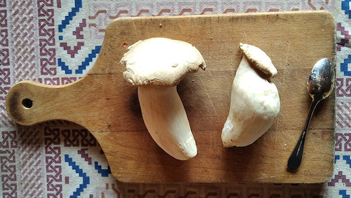 Two king oyster mushrooms on a cutting board